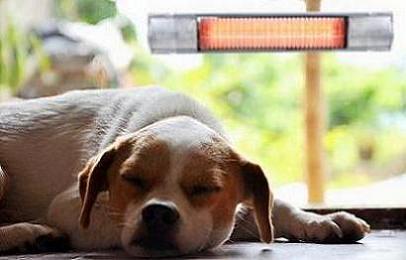 Promienniki ciepła - pies